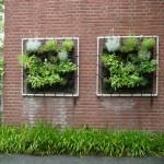 gebruik je muur voor een groene eetbare oase