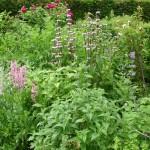 onderhoudsvriendelijk tuin border