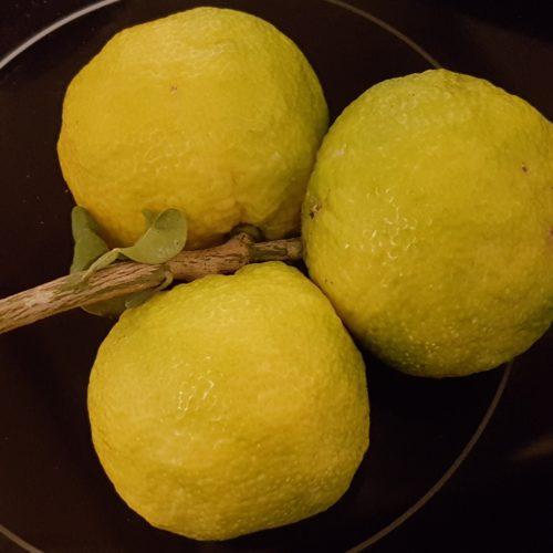 Yuzu vrucht