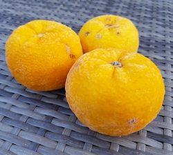 Yuzu vruchten dv