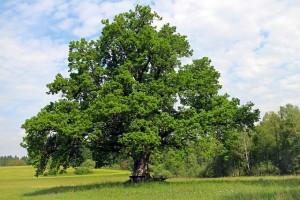 Meditatie met een boom