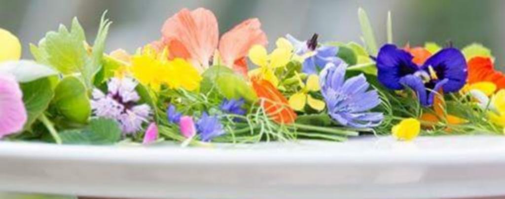geneeskracht-van-bloemen