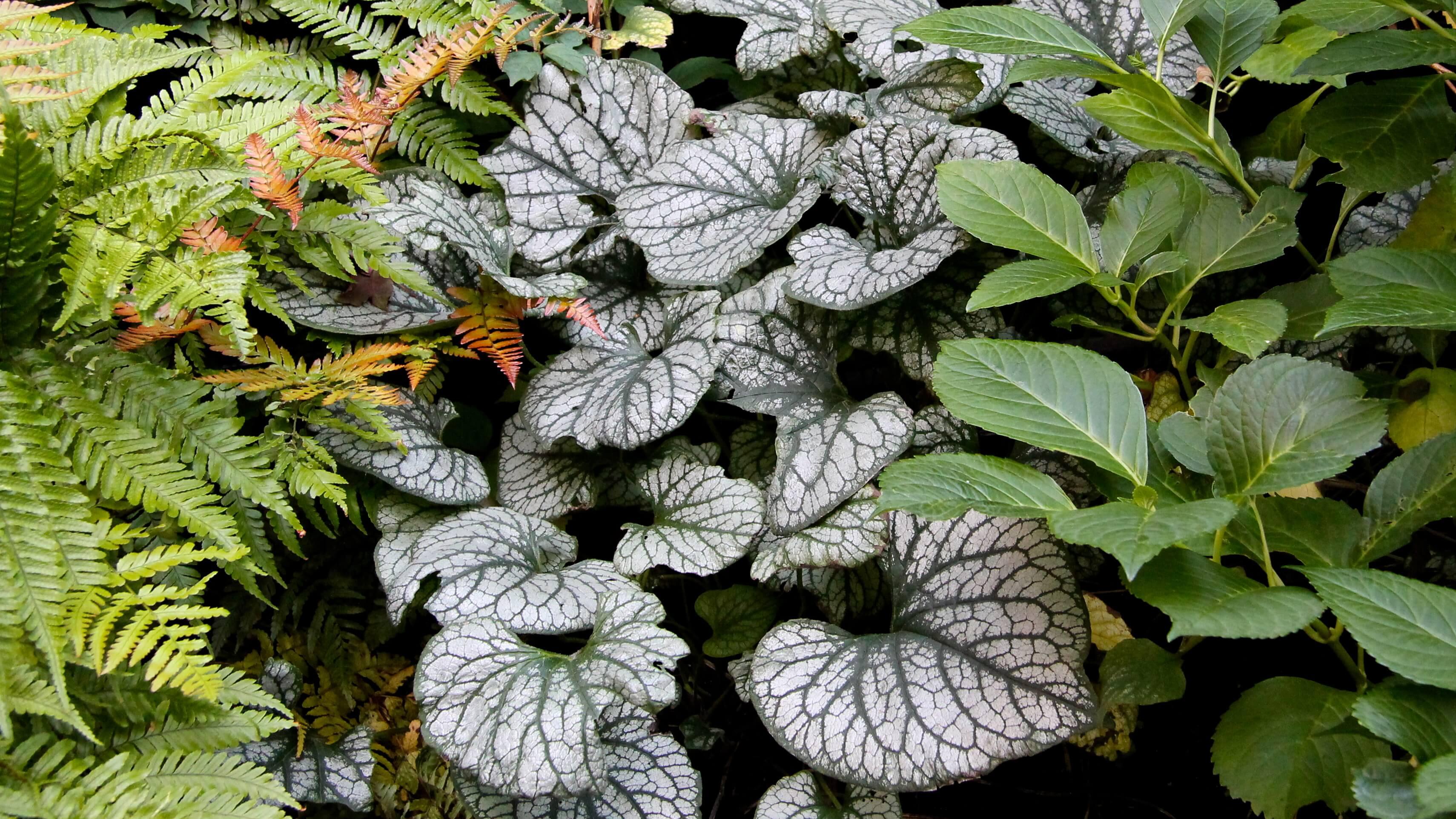 Vaste Planten Tuin : Beplanting border combinatie siergrassen vaste planten en bollen
