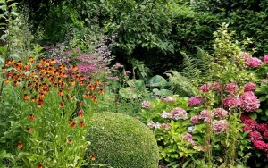 combineer vaste planten met heesters