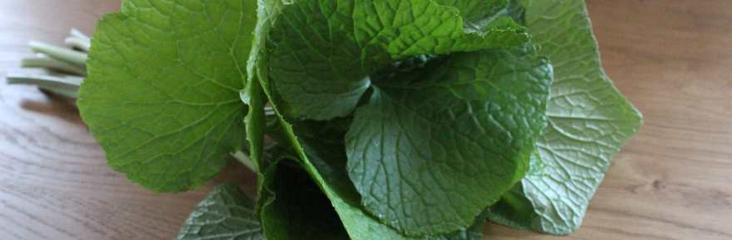 wasabiblad-isosaponarin