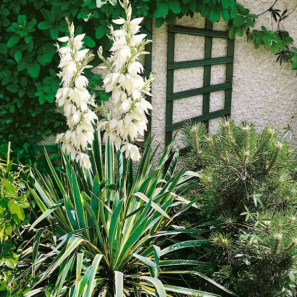 huisdiervriendelijke en heilzame planten voor je tuin. Black Bedroom Furniture Sets. Home Design Ideas