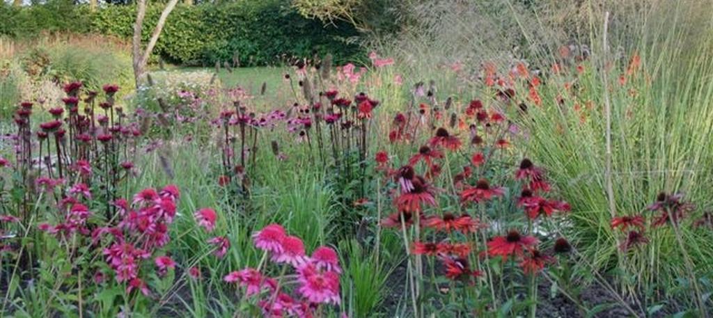 Onderhoudsvrije tuin 4 seizoenen lang