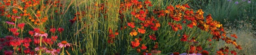 leven in de tuin met kleur