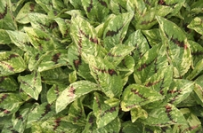 Streekblad grijs groen en gelukkig door vrolijke daktuin