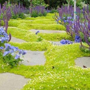 bodembedekkers in de tuin