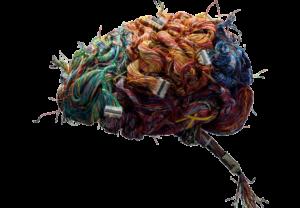 brein, hersenen