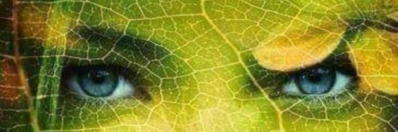 van tuinarchitectuur naar tuintherapie