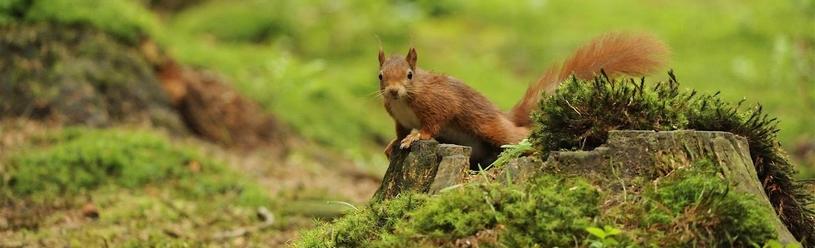 10 positieve effecten van noten verzamelen in de herfst