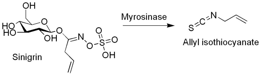 Sinigrine - De ITC's worden geproduceerd uit Sinigrine onder neutrale en alkalische omstandigheden. Het allyl isothiocyanaat (AITC) heeft het belangrijkste effect op de algehele smaak van wasabi door de hoge concentraties die in het rhizoomdeel van de plant voorkomen. Echter, 6-methylthiohexyl-ITC en 7-methylthioheptyl-ITC dragen beide bij aan de karakteristieke frisse sprankelende smaak van wasabi