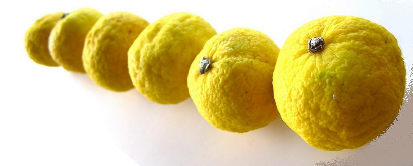 Citrus fruit bij SitGreen