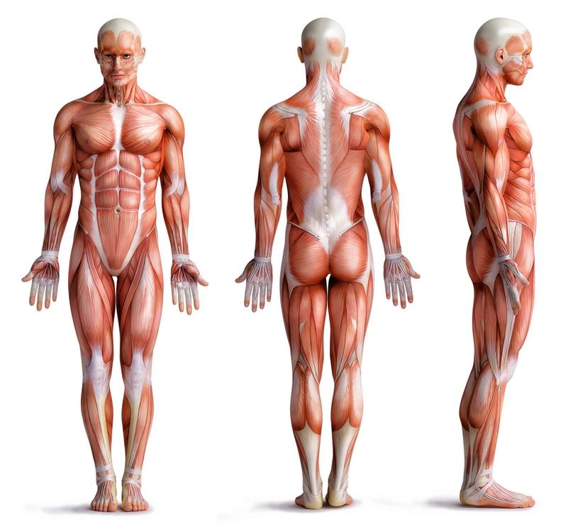 sport massage of deep tissue masage