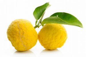 Yuzu citrus fruit