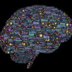 het brein als intelligentiebron