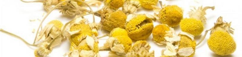 Kamille in de kruiden EHBO wand
