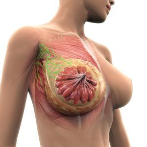 borsten willen gemasseerd worden