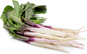 De Kabu raap (Brassica rapa var rapifera)