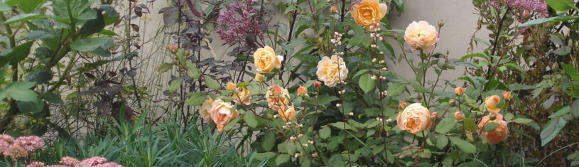 wabi sabi garden