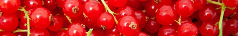 rood fruit - rode bessen