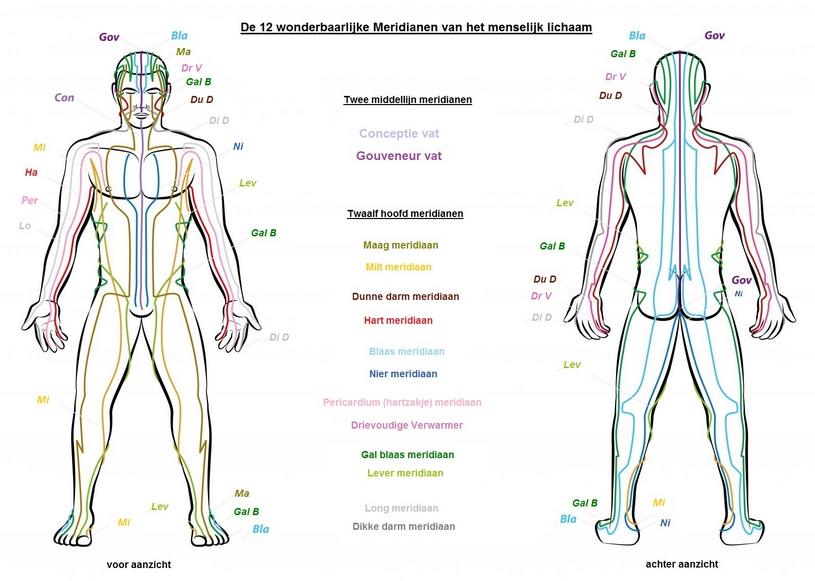 meridianen in het lichaam