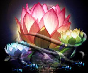 de parel van de Lotus