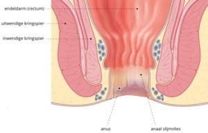 reflexologie vrouwelijk bekken - kringspieren