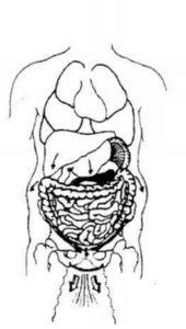 reflexologie vrouwelijk bekken - zwakke bekkenbodem