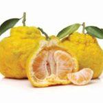 citrus vrucht Ugli