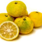 citrus vrucht Yuzu verde amarillo