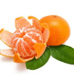 Mandarijn 'Clementine Orogos'