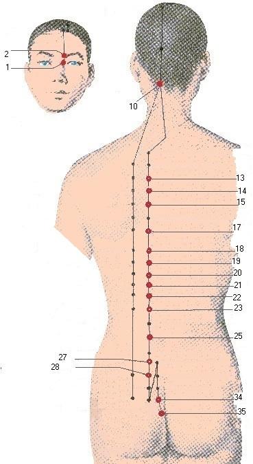 acupressuur blaas meridiaan op de rug bij blaasontsteking
