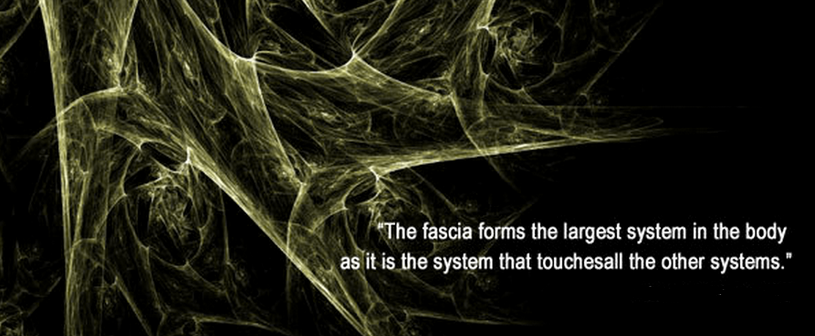 de fascia houdt ons lichaam bij elkaar als één geheel