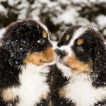 honden die elkaar besnuffelen