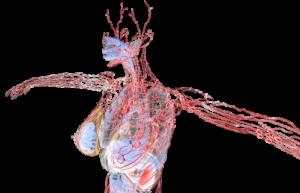 lymfatisch systeem van de vrouw