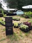 Landgoed Bingerden, Internationale Kwekerijdagen met ShoutensKruiden en Eetbarewand