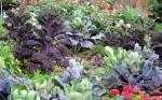 breng met kleur leven in je tuin